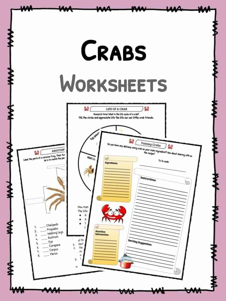 Crabs Worksheet
