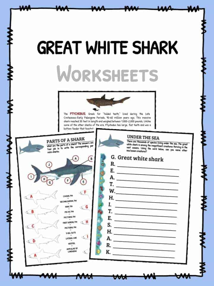 Great White Shark Worksheets