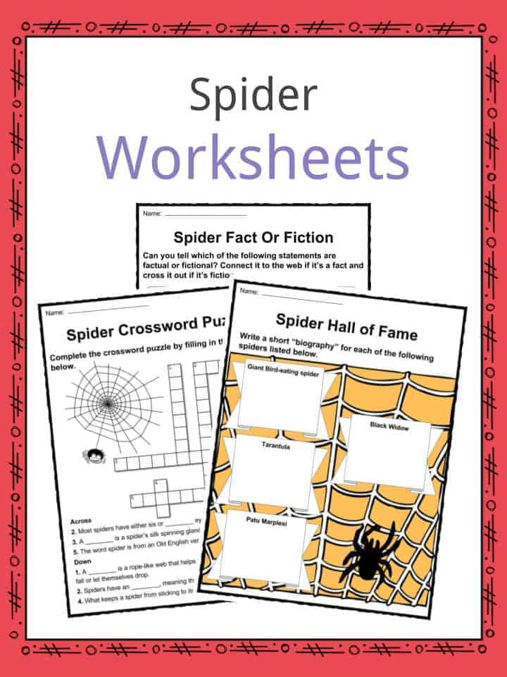 Spider Worksheets