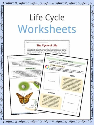 Life Cycle Worksheets