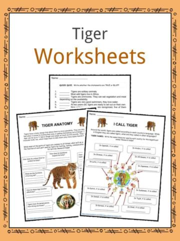 Tiger Worksheets