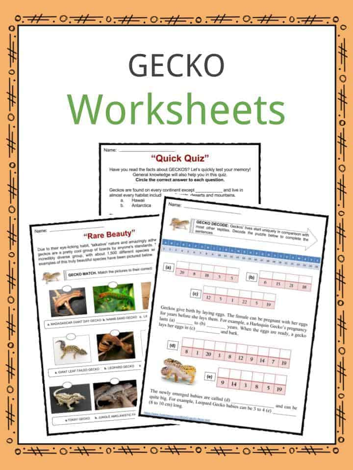 Gecko Worksheets