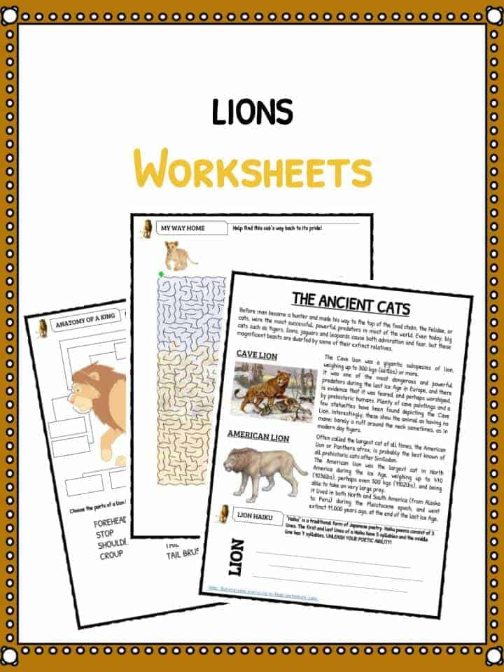 Lion Facts, Worksheets & Information for KidsKidsKonnect