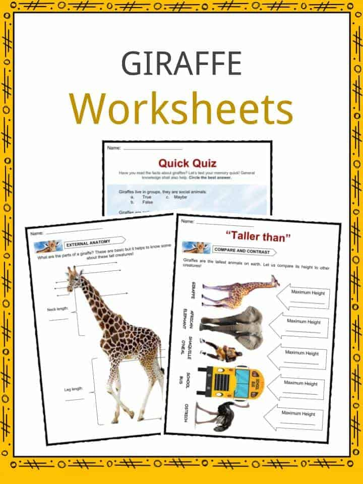 Giraffe Facts Worksheets Information For Kids
