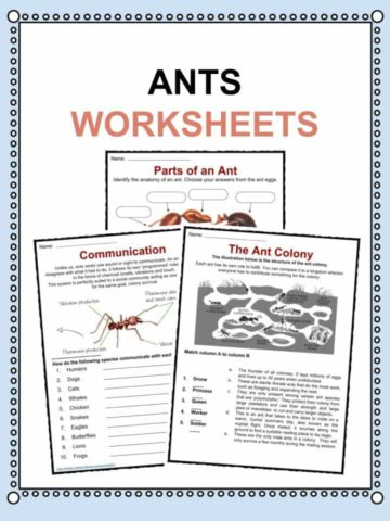 Ant Worksheets