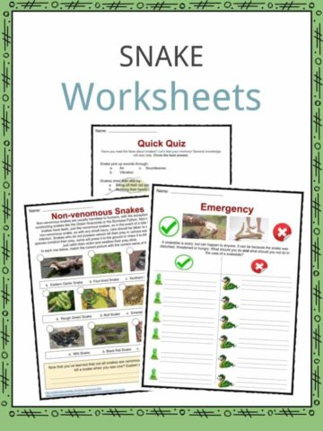 Snake Worksheets