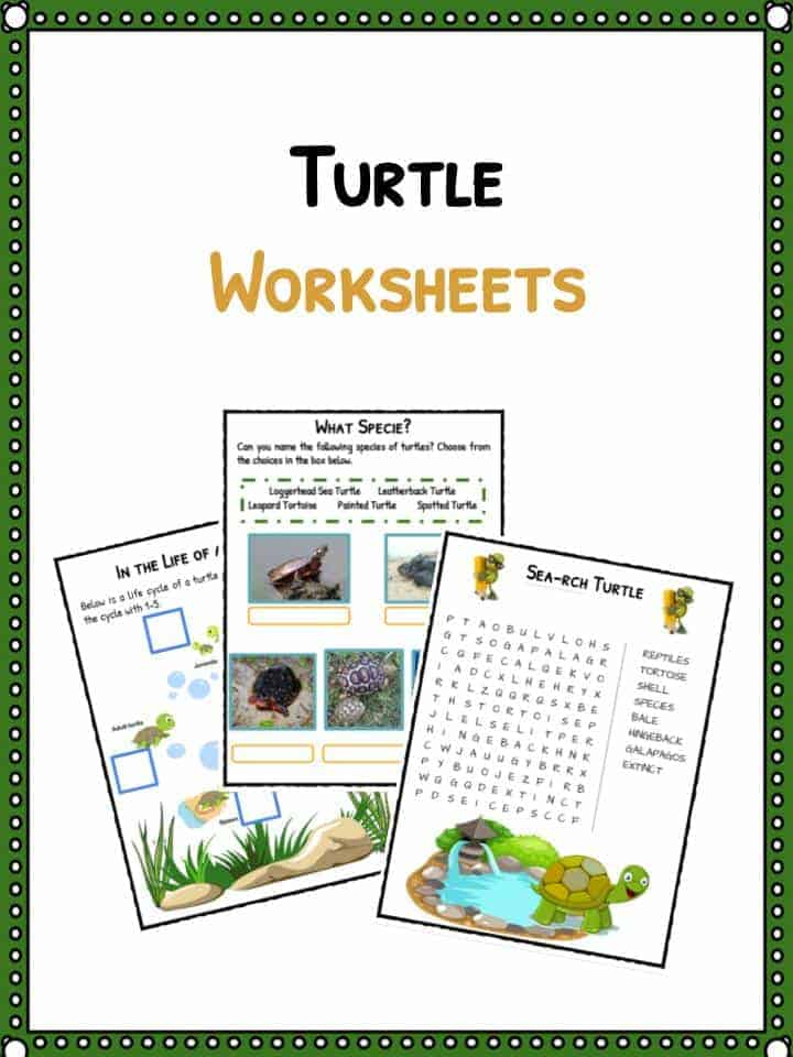 Turtle Facts Worksheets Habitat Species Information For Kids