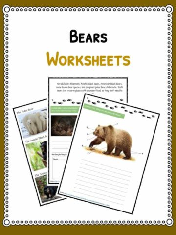 bears-worksheet