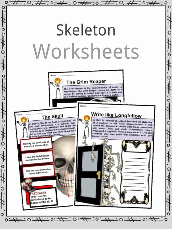 Skeleton Worksheets