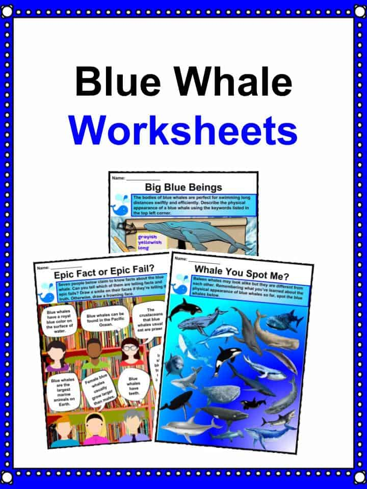 Blue Whale Worksheets