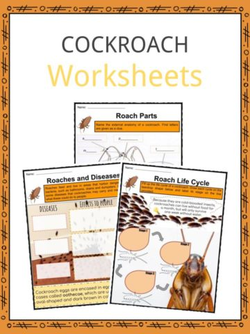 Cockroach Worksheets