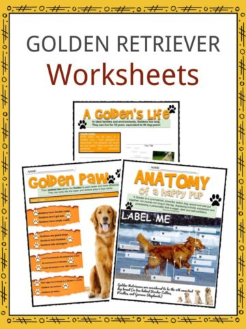 GOLDEN RETRIEVER Worksheets