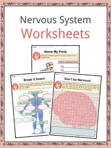 Nervous System Worksheets
