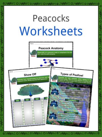 Peacocks Worksheets