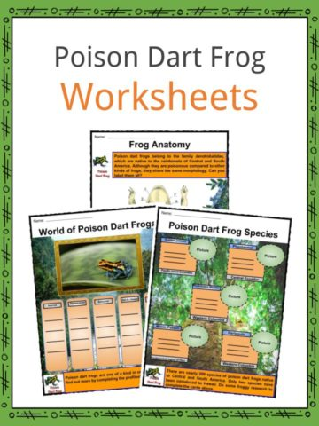 Poison Dart Frog Worksheets