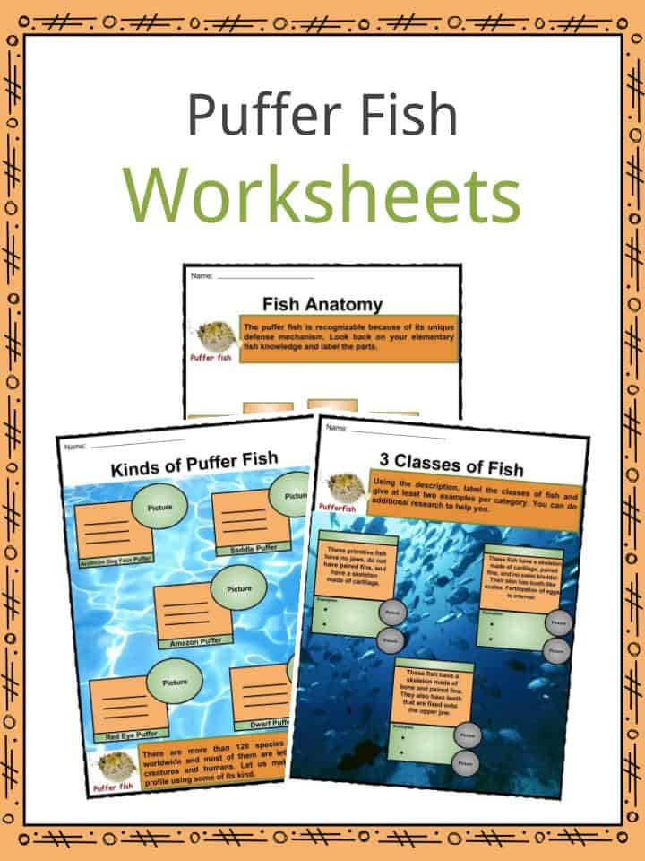 Puffer Fish Facts Worksheets Species Anatomy Habitat For Kids