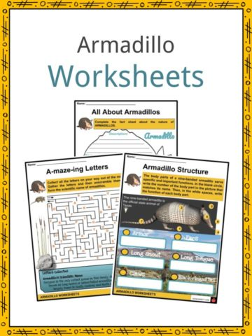 Armadillo Worksheet