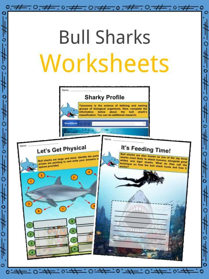 Bull Sharks Worksheets