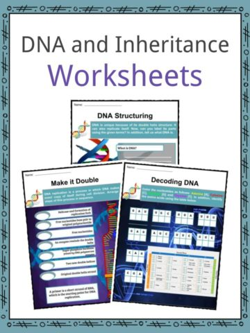 DNA and Inheritance Worksheets