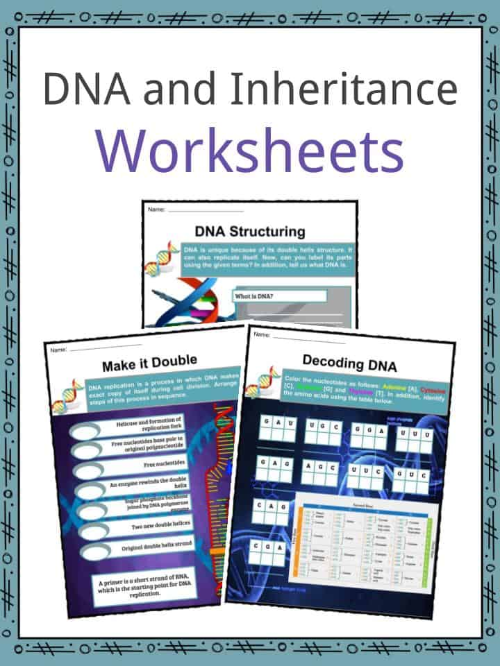 Dna Inheritance Facts Worksheets Inheritance Building Blocks Kids