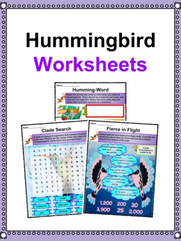 Hummingbird Worksheets