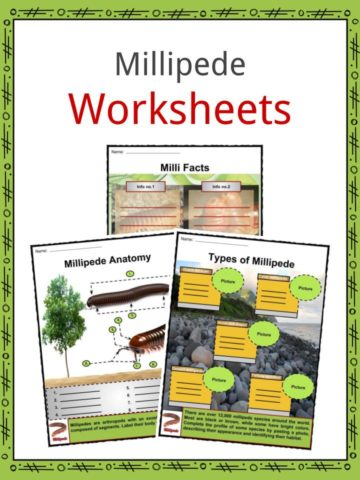 Millipede Worksheets