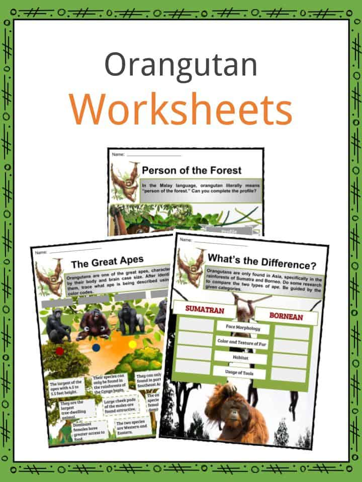 Orangutan Worksheets