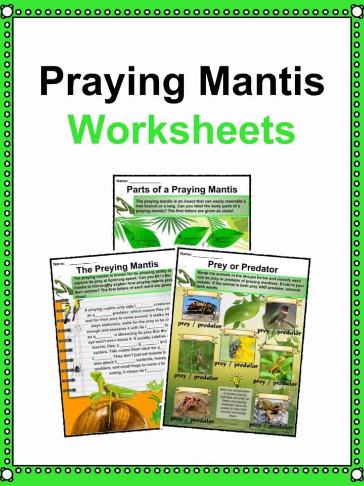 Praying Mantis Worksheets