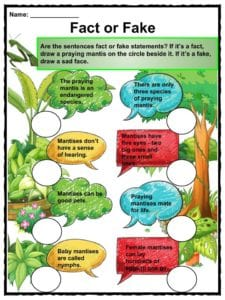 Praying Mantis Facts Worksheets Habitat Diet For Kids
