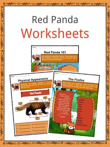 Red Panda Worksheets