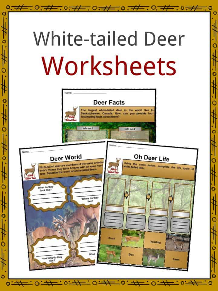 White-tailed Deer Worksheets