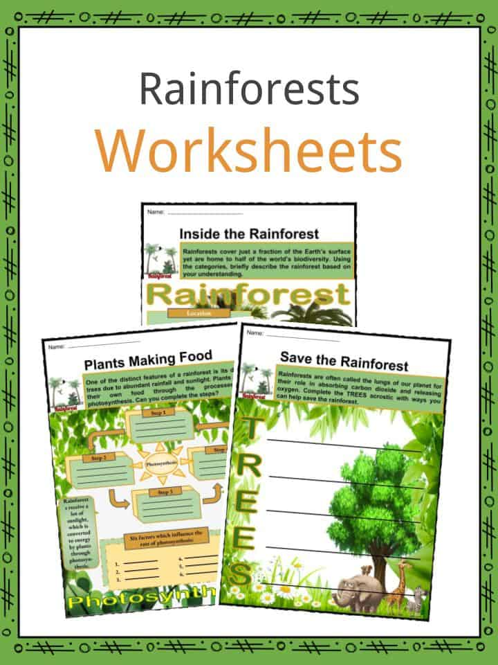 Rainforests Worksheets