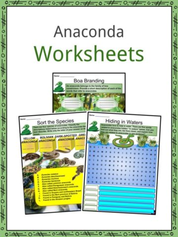 Anaconda Worksheets