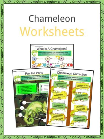 Chameleon Worksheets