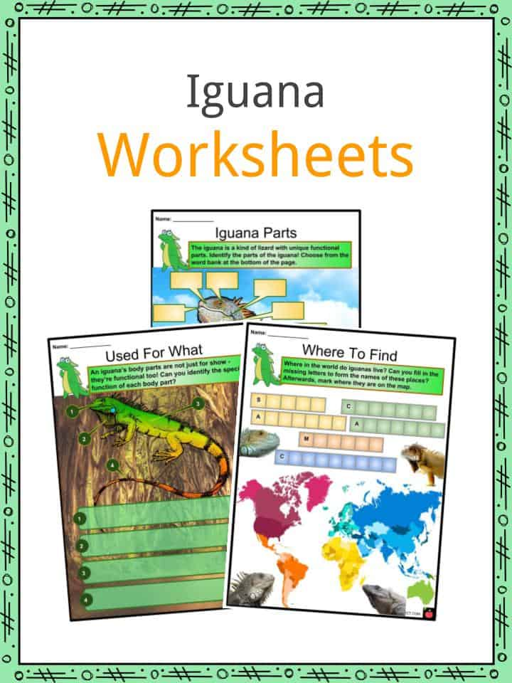 Iguana Worksheets