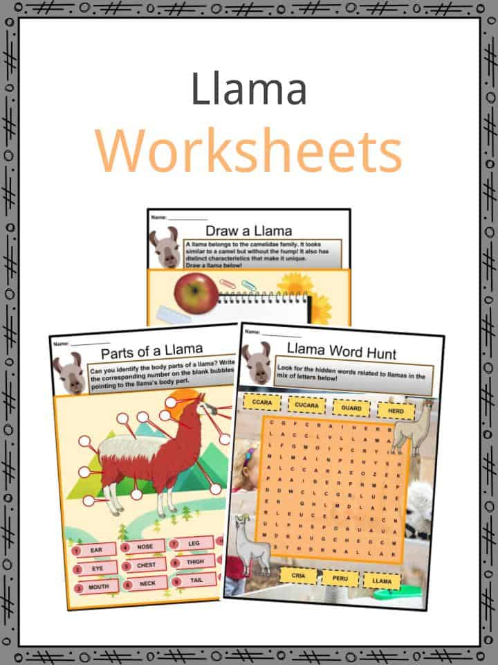 Llama Facts Worksheets Species Diet Reproduction Wool For Kids