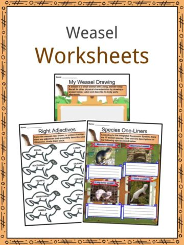 Weasel Worksheets