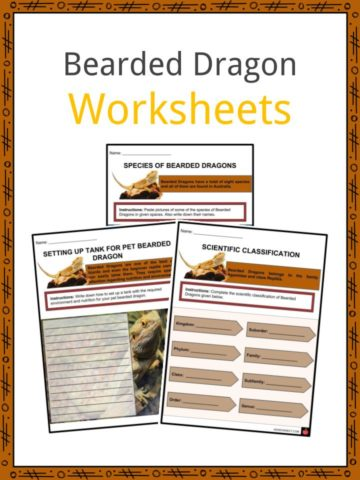 Bearded Dragon Worksheets