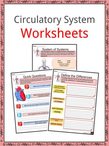 Circulatory System Worksheets