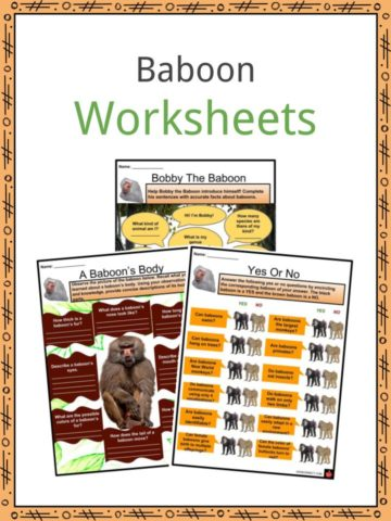 Baboon Worksheets