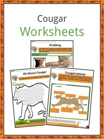 Cougar Worksheets