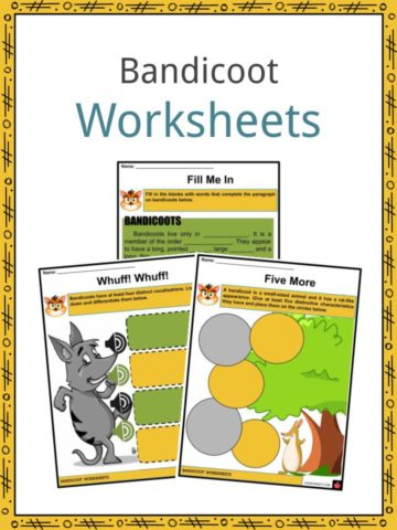 Bandicoot Worksheets