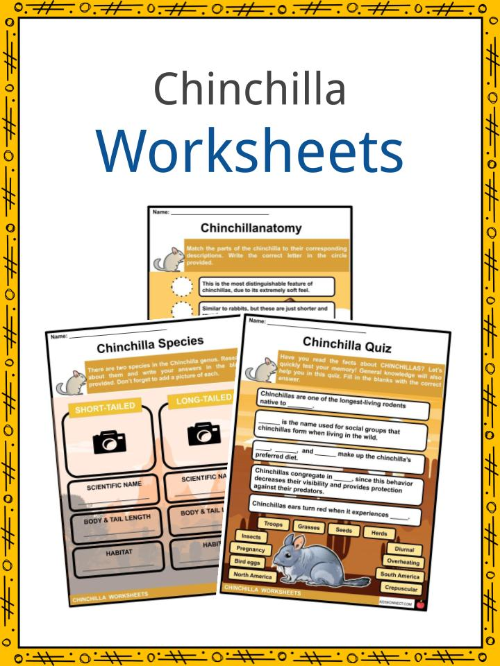 Chinchilla Worksheets