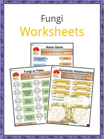 Fungi Worksheets