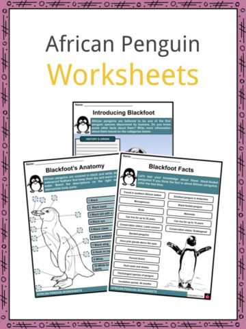 African Penguin Worksheets