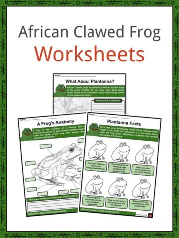 African Clawed Frog Worksheets