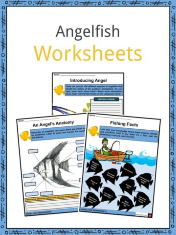 Angelfish Worksheets