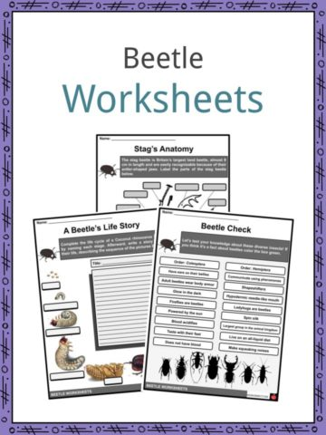 Beetle Worksheets