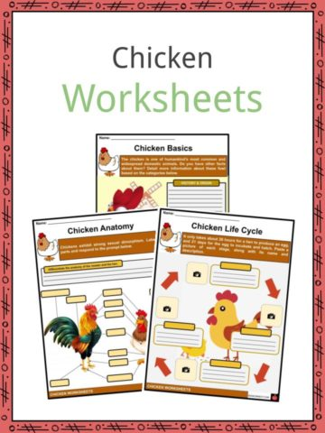 Chicken Worksheets