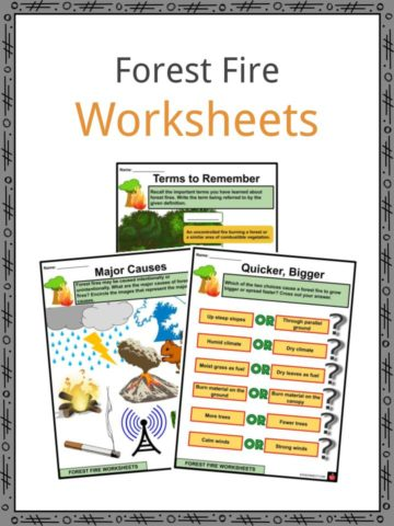 Forest Fire Worksheets